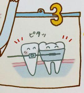 矯正でなぜ歯は動くのか❻